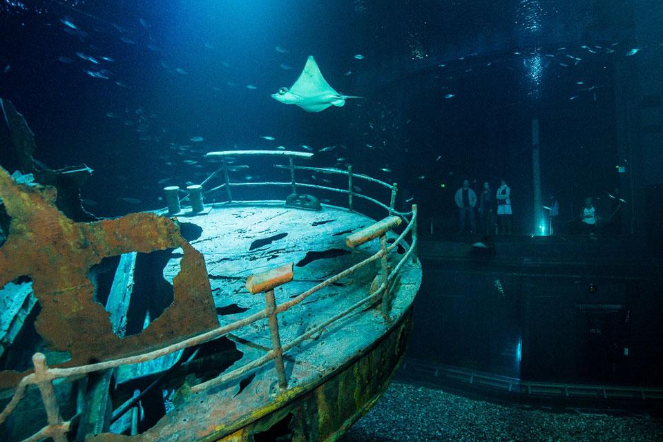 stadtmarketing-stralsund-neuigkeiten-Anpfiff-für-Familiensommer-2018-am-Deutschen-Meeresmuseum-01